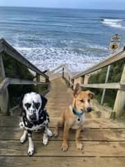 Doggies at  jan juc beach