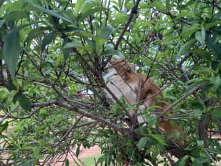 This is Zack in the peach tree