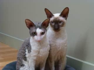 Mia ( left) and Darcy