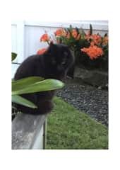 Benji, keeping watch in the front garden