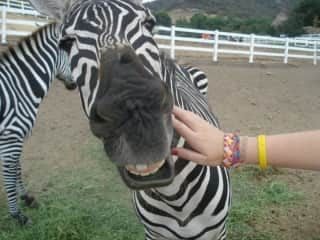 The Zebra where our horse was stabled