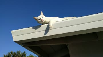 Zoe on the roof.