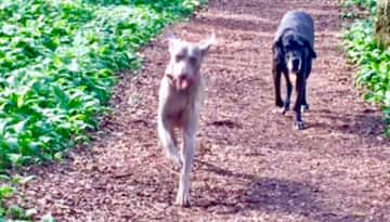 Out with Bess and Ollie ( nailsea housesit ) see review