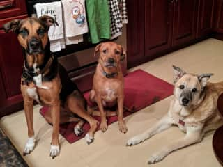 The Girlz - Minnie, Lucy and Tiger Lily - Guam Sit