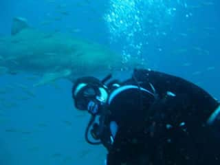 Me in my home state diving with the sand tiger sharks