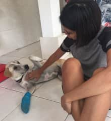 Arthur the street dog and his fracture, at the vets (Bali, Indonesia: Jan-17)