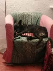 This is our new Baby Caz  we is a rescue dog and had been chained up out side in all weathers so is just enjoying a bit of home comfort .