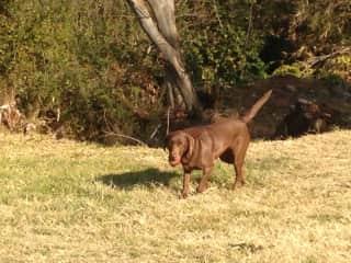 Rusty, enjoing his walk
