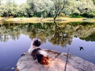 Bebe fishing at the back pond.