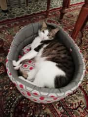 Ginga in his bed
