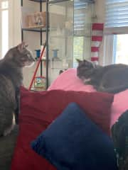 Olivia and Pancake coexisting