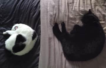 Kuma & Toshi sleeping