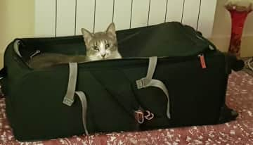 Attis, my pet sit friend who wanted to come travelling!