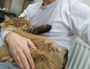 Cat-sitting Ivanka in London