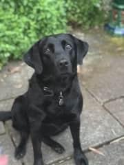 Saba our Dog