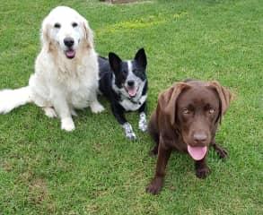 Bonny,Kempsey and Molly