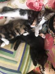 The three sleeping again.
