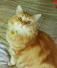 Sasha - our beautiful fluffy girl