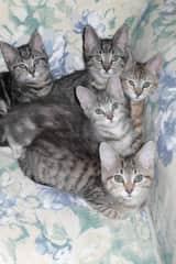 Foster kittens !!!
