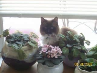 My Dora LOVED my African Violets & always had to check my work after watering them lol