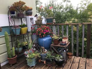some of our deck garden