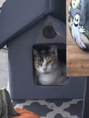 I am a stray kitty that now lives on the front porch in a little heated house.