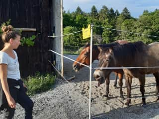 2019 - Happily stepping in to feed our friend's horses any time