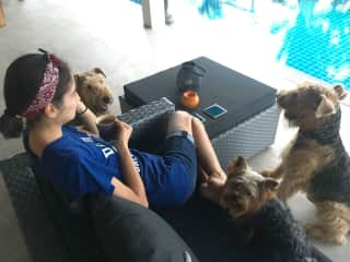 Morning coffee with Rafa, Bella and Ghandi during a housesit in Koh Samui