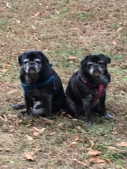 Yoda and Frannie - siblings who died in 2017 at age 15