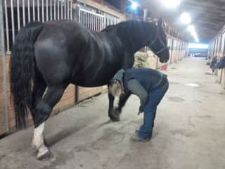 Visiting my sisters horse Riley. She is part Percheron and big girl to ride.