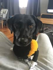 Mila from Auckland always likes to play!