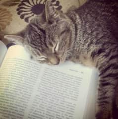 My Itty bitty sleeping while I read