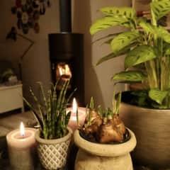 Cozy wood stove.