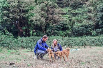 We spent 2 weeks at an animal shelter in Japan looking after their dogs and cats.