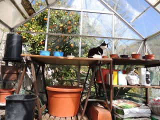 Kitty in the greenhouse