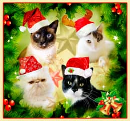 Photoshopped pics of cats I've taken to make an Xmas card