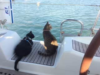 Frankie and Summer watching seabirds