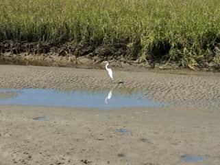 Birding at the beach