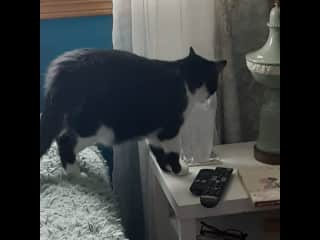 Wimbie my cat drinking from my water glass as usual.   He ignores his glass and prefers mine.