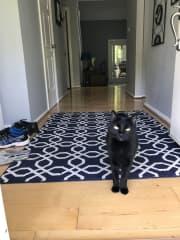 Max greeting you hello!