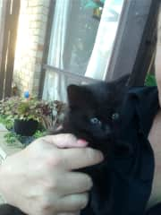 My previous pet toothless