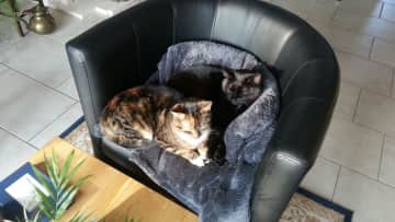 My cats Lisa and Luna cuddling together