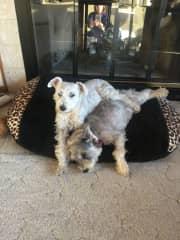Casper and Roxy, my babies!