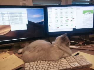 Hendrix helping with graphic design