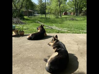 Keiser and Sasha - My first THS sit!