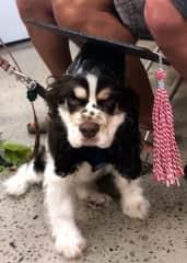 Shiloh's obedience school graduation