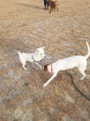Nabi playing with a puppy friend