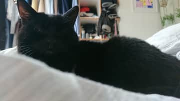 Tato in her favourite place –on the bed!