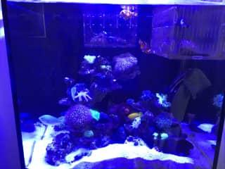 Aquarium in the Sitting Room