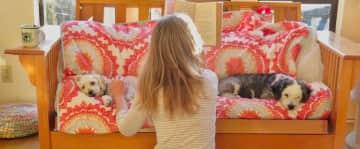 Juliana reading the Sugarless Plum to Bobo and Yogi in Malibu, CA.